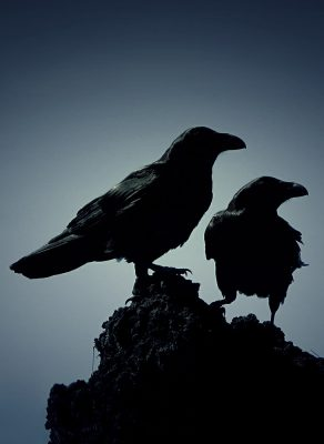 Odin's ravens Huginn and Muninn on a rock