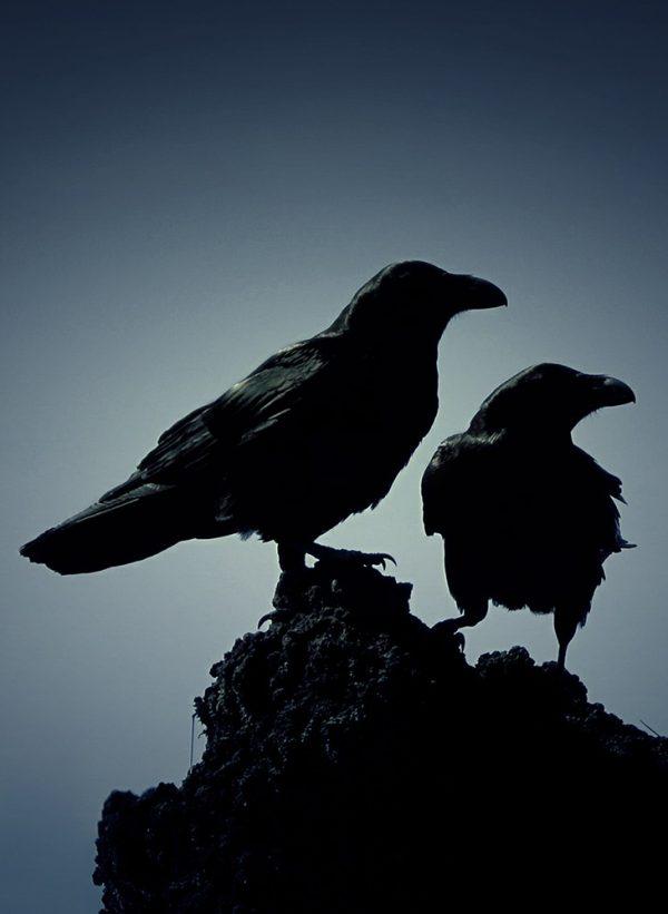 Odin's ravens Huginn and Muninn on a rock